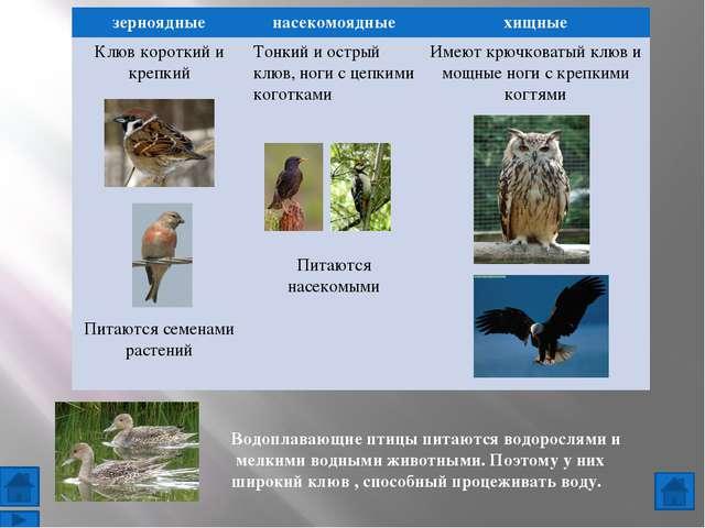 Использованы фотографии животных: http://materukhin.ru/?bba=pictures-of-cater...