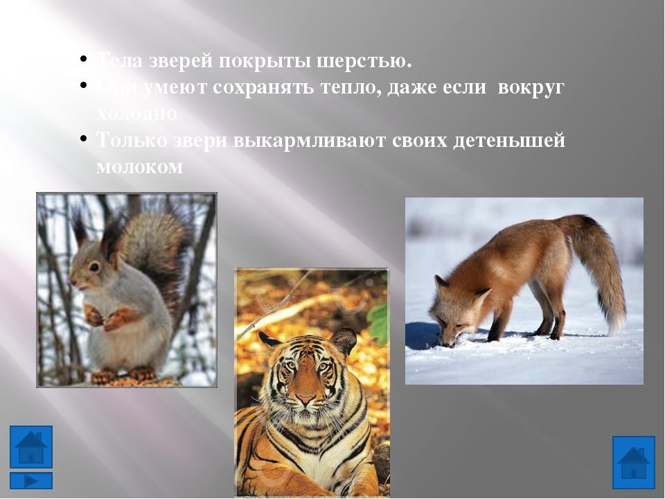 http://s004.radikal.ru/i205/1101/14/750e0f95fa96.jpg - тигр http://www.proza....