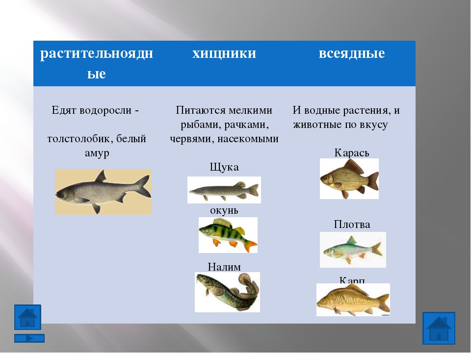 Проверь себя Узнай животное по описанию: У животного 6 ног, тело разделено На...