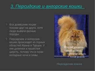 3. Персидские и ангорские кошки  Персидская кошка Все домашние кошки похожи