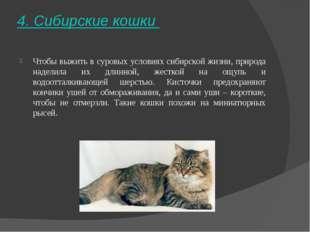 4. Сибирские кошки Чтобы выжить в суровых условиях сибирской жизни, природа