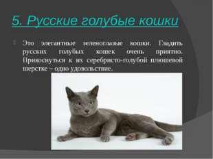 5. Русские голубые кошки Это элегантные зеленоглазые кошки. Гладить русских г