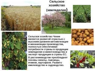 Сельское хозяйство (земледелие) Сельское хозяйство Чехии является развитой от