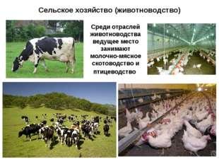 Сельское хозяйство (животноводство) Среди отраслей животноводства ведущее мес