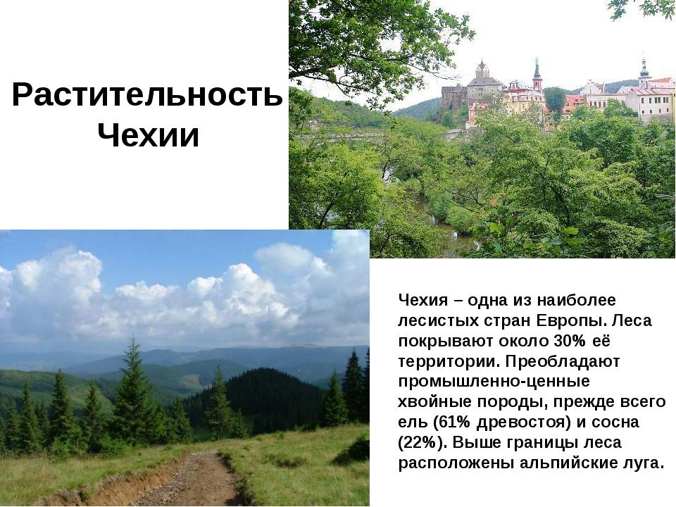 Рaстительность Чехии Чехия – одна из наиболее лесистых стран Европы. Леса пок...