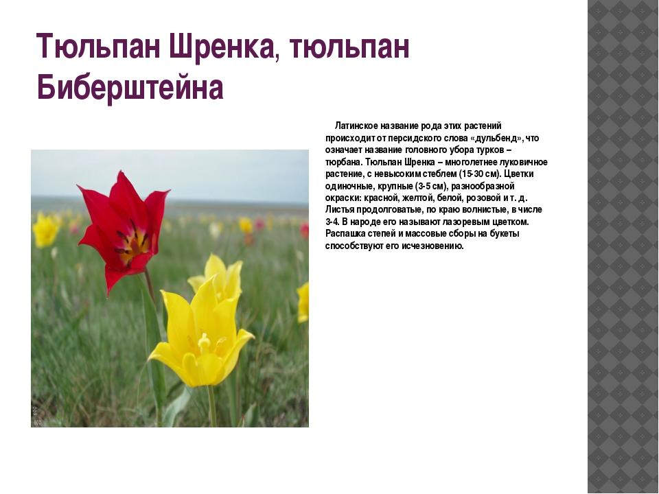 Тюльпан Шренка,тюльпан Биберштейна Латинское название рода этих растений пр...