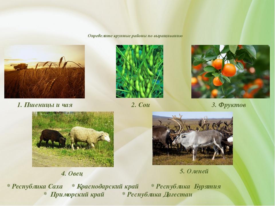 Определите крупные районы по выращиванию * Республика Саха * Краснодарский к...