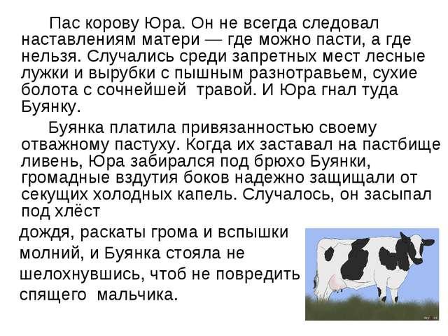 Пас корову Юра. Он не всегда следовал наставлениям матери — где можно пасти...