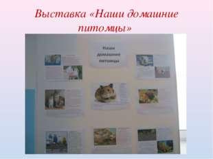 Выставка «Наши домашние питомцы»