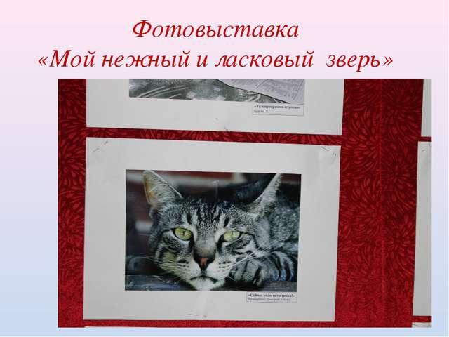 Фотовыставка «Мой нежный и ласковый зверь»