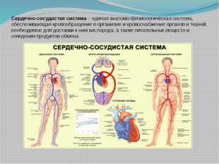 Сердечно-сосудистая система – единая анатомо-физиологическая система, обеспеч