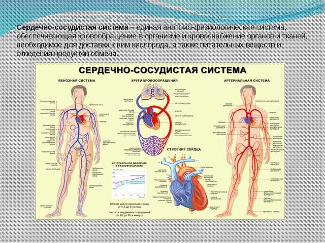 Сердечно-сосудистая система – единая анатомо-физиологическая система, обеспеч...