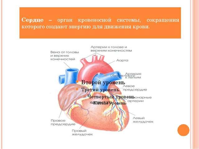 Сердце – орган кровеносной системы, сокращения которого создают энергию для д...