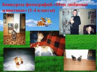 Конкурсы фотографий «Мои любимые животные» (1-4 классы)