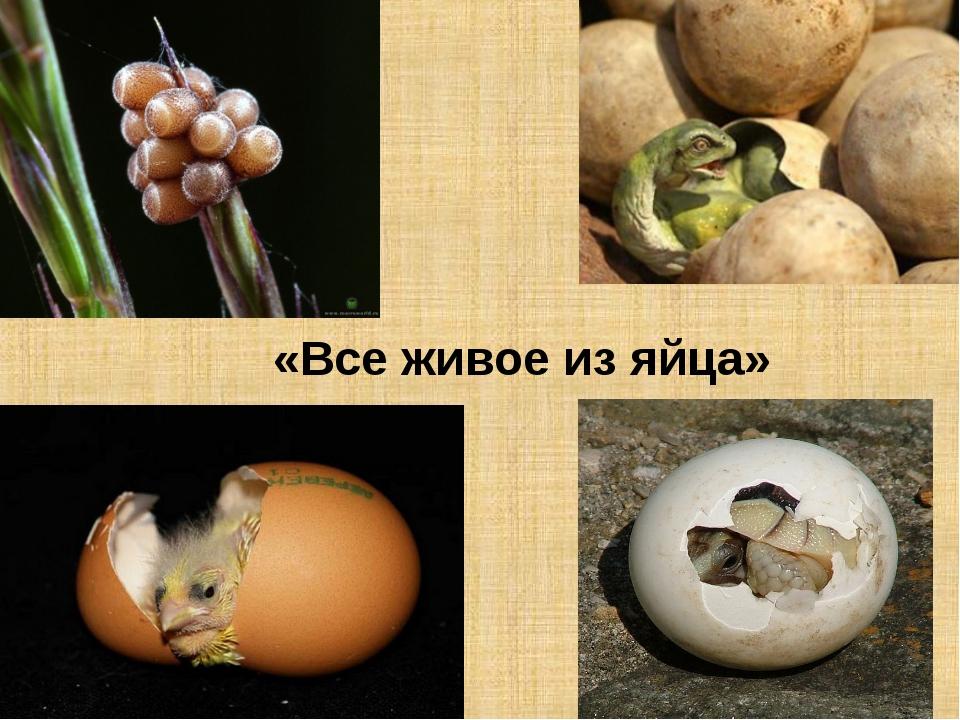 «Все живое из яйца»
