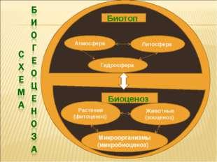 Гидросфера Атмосфера Литосфера Животные (зооценоз) Растения (фитоценоз) Микро