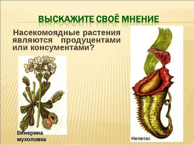 Насекомоядные растения являются продуцентами или консументами? Венерина мухо...