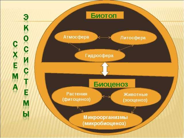 Гидросфера Атмосфера Литосфера Животные (зооценоз) Растения (фитоценоз) Микро...