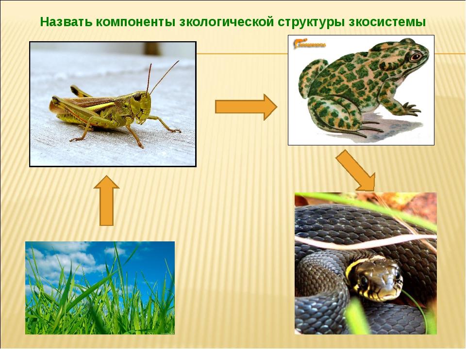 Назвать компоненты зкологической структуры зкосистемы