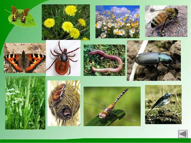 Источники информации: 1.Изображения с http://images.yandex.ru 2. Авторские за...