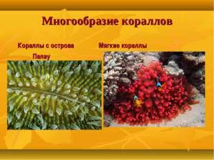 Многообразие кораллов Кораллы с острова Мягкие кораллы Палау