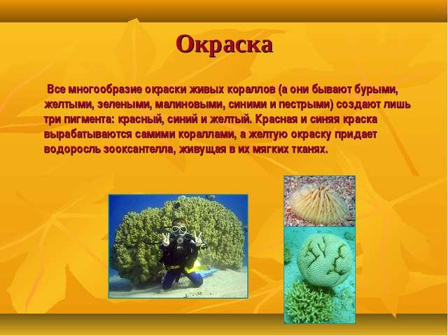 Окраска Все многообразие окраски живых кораллов (а они бывают бурыми, желтыми...