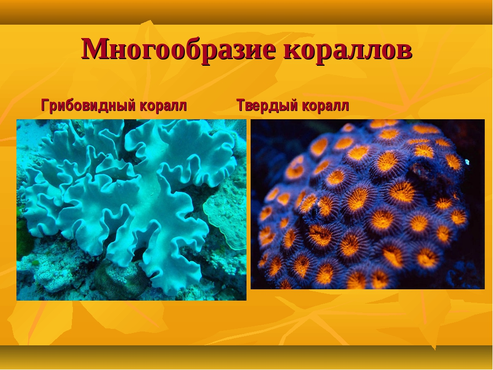 Многообразие кораллов Грибовидный коралл Твердый коралл