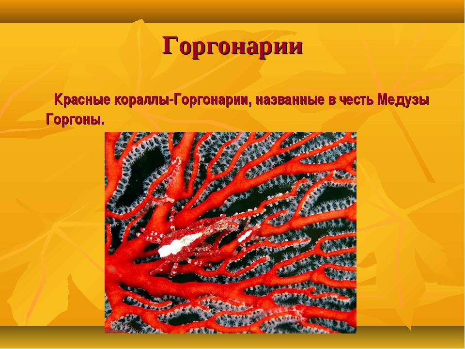 Горгонарии Красные кораллы-Горгонарии, названные в честь Медузы Горгоны.