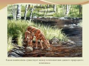 Какая взаимосвязь существует между компонентами данного природного комплекса