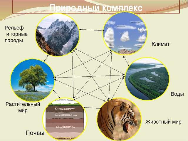 Природный комплекс Климат Воды Животный мир Почвы Растительный мир Рельеф и г...