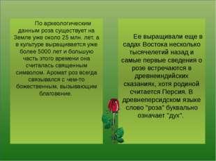 По археологическим данным роза существует на Земле уже около 25 млн. лет, а