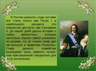 В России украшать сады кустами роз стали только при Петре I, а наибольшего р