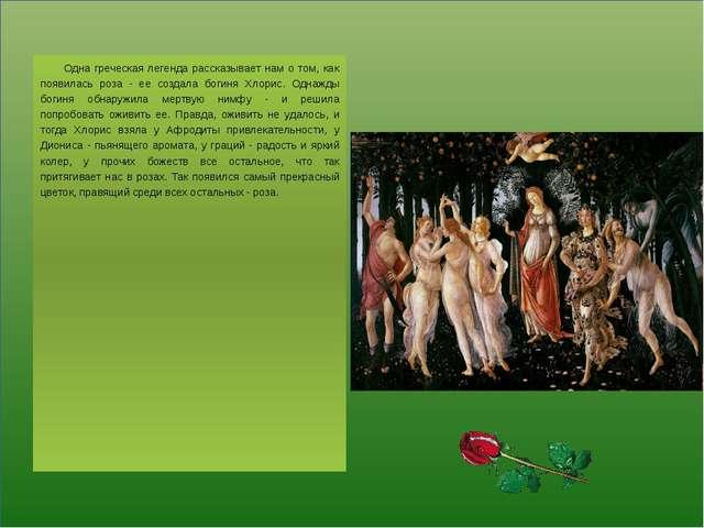 Одна греческая легенда рассказывает нам о том, как появилась роза - ее созда...