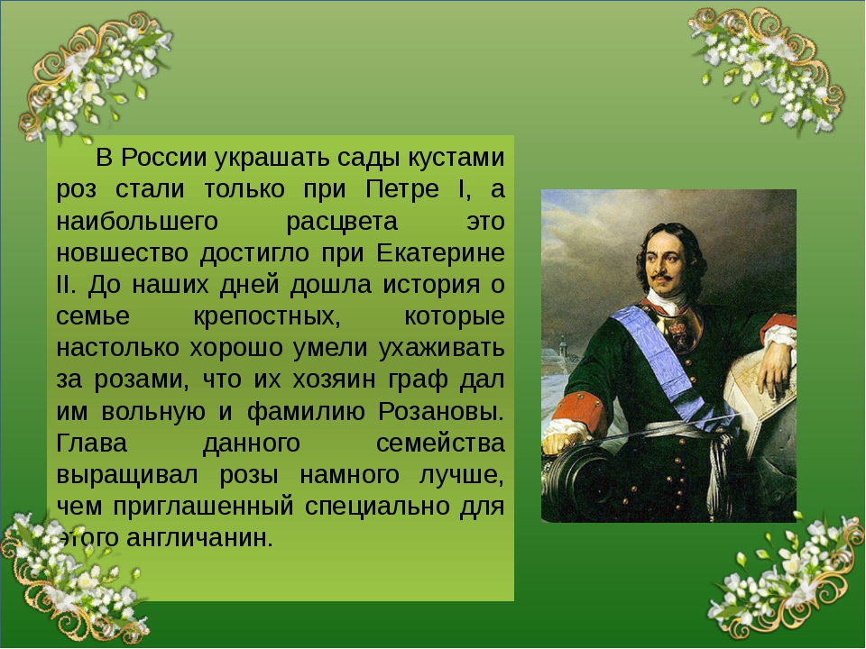 В России украшать сады кустами роз стали только при Петре I, а наибольшего р...