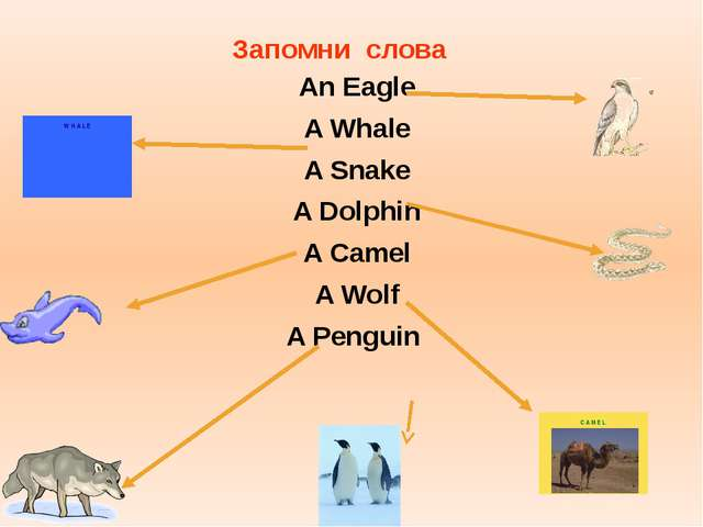 An Eagle A Whale A Snake A Dolphin A Camel A Wolf A Penguin Запомни слова