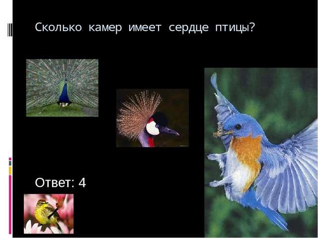 Сколько камер имеет сердце птицы? Ответ: 4