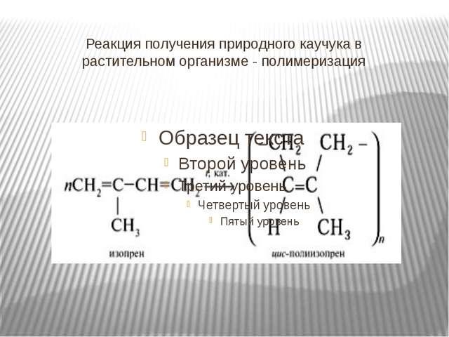 Реакция получения природного каучука в растительном организме - полимеризация
