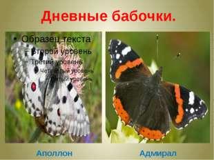 Дневные бабочки. Аполлон Адмирал