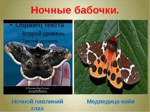 Ночные бабочки. Ночной павлиний глаз Медведица-кайя