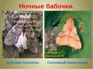 Ночные бабочки. Дубовая хохлатка Сосновый коконопряд