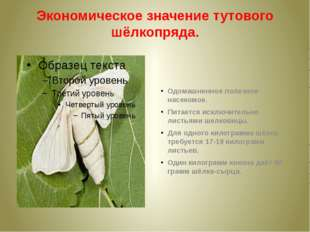 Экономическое значение тутового шёлкопряда. Одомашненное полезное насекомое.