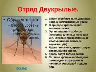 Отряд Двукрылые. Комар Имеет стройное тело. Длинные ноги. Многочисленные усик