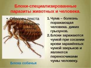 Блохи-специализированные паразиты животных и человека. Блоха собачья Чума – б