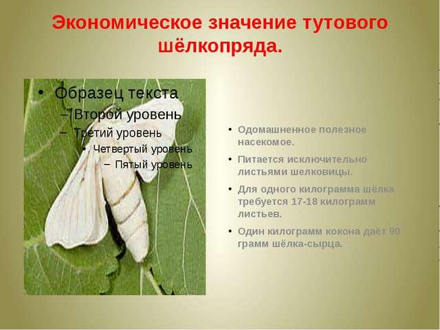 Экономическое значение тутового шёлкопряда. Одомашненное полезное насекомое....