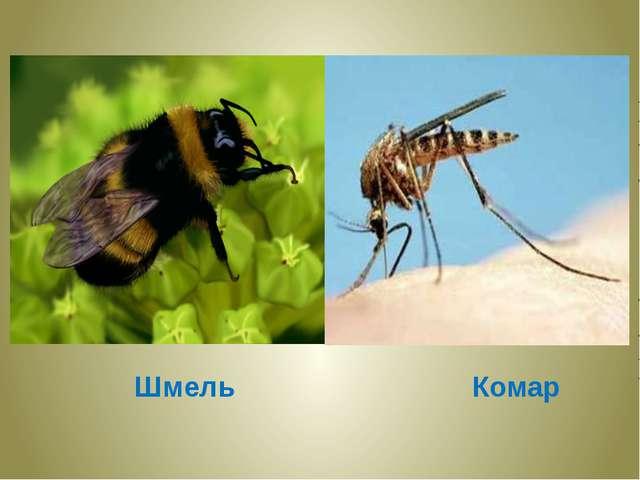 Шмель Комар