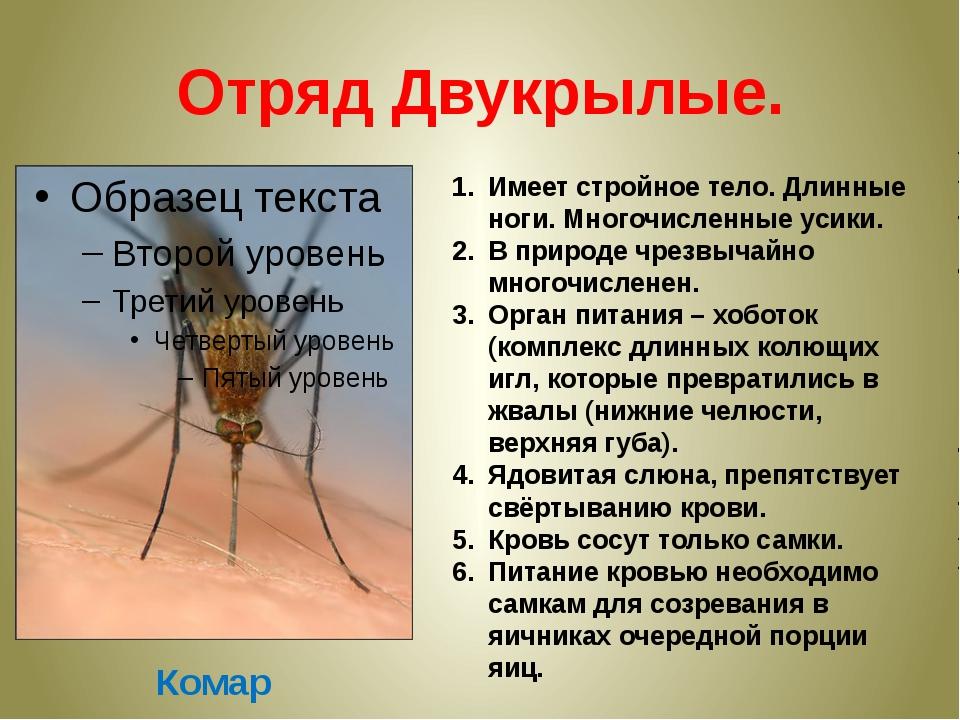 Отряд Двукрылые. Комар Имеет стройное тело. Длинные ноги. Многочисленные усик...
