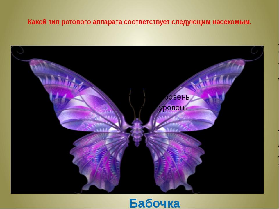 Какой тип ротового аппарата соответствует следующим насекомым. Бабочка