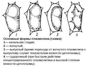 Основные формы плазмолиза (схема): 1— начальная стадия; 2 — вогнутый; 3 — вып