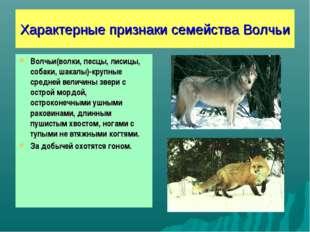Характерные признаки семейства Волчьи Волчьи(волки, песцы, лисицы, собаки, ша