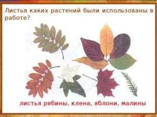 http://aida.ucoz.ru Листья каких растений были использованы в работе? листья
